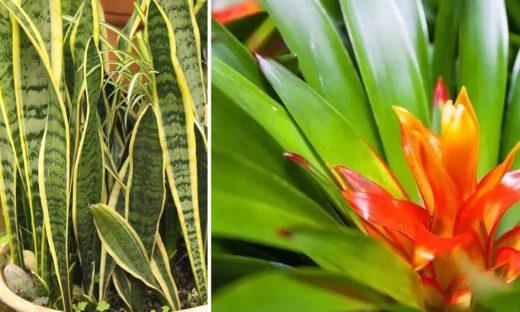 Plantes Intérieures Sans Lumière