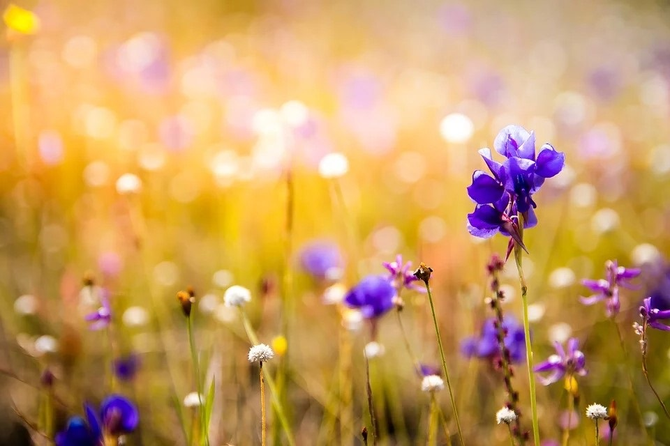 Les Orchidees Pixabay