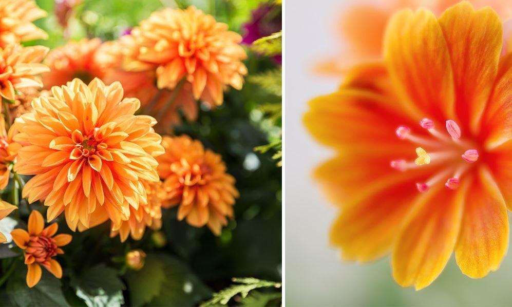 Fleur Orange Jardin