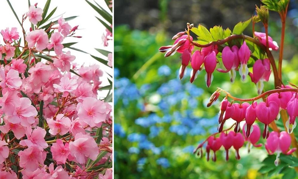 Fleurs Roses Jardin
