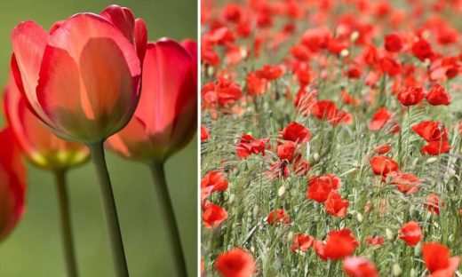 Fleurs Rouges Les Plus Belles