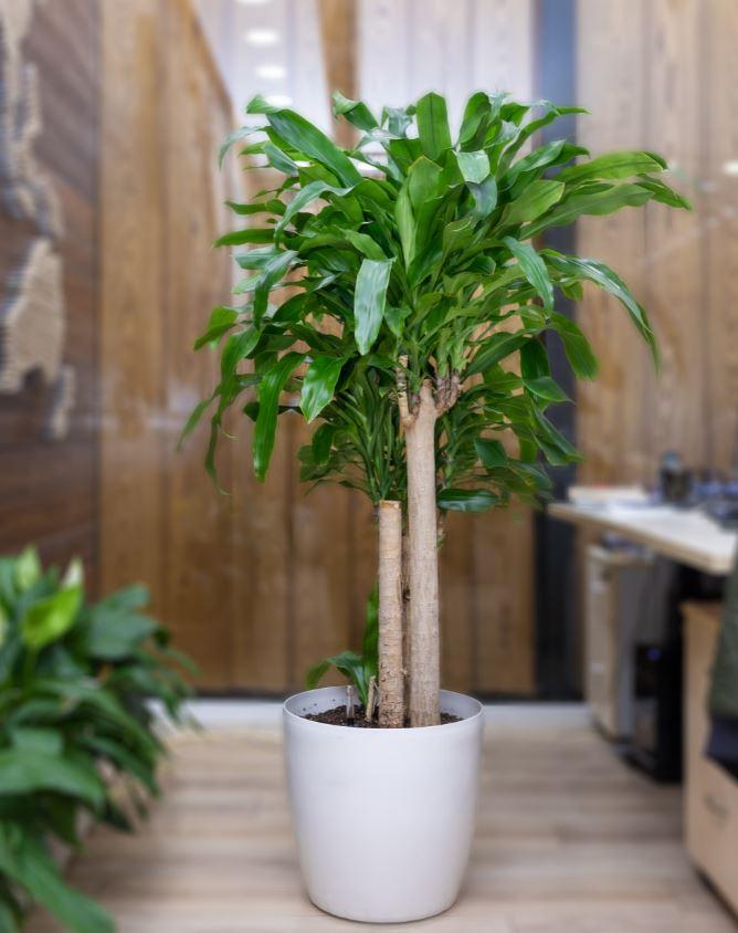Plante D Interieur La Liste Des 31 Plus Belles Pour Votre Maison