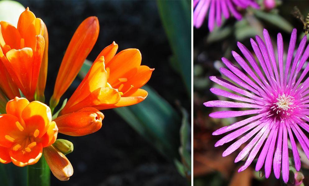 Plante Grasse A Fleur