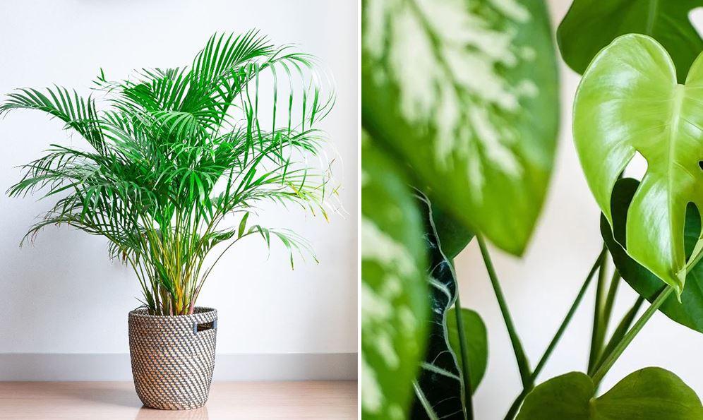 Plante Interieur Deco