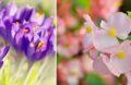 Fleurs Automne
