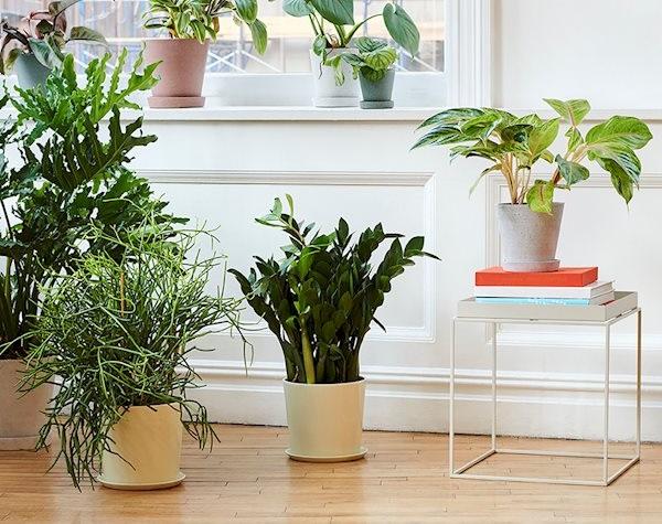 Multiples Plantes Pour Une Décoration Feng Shui Naturelle