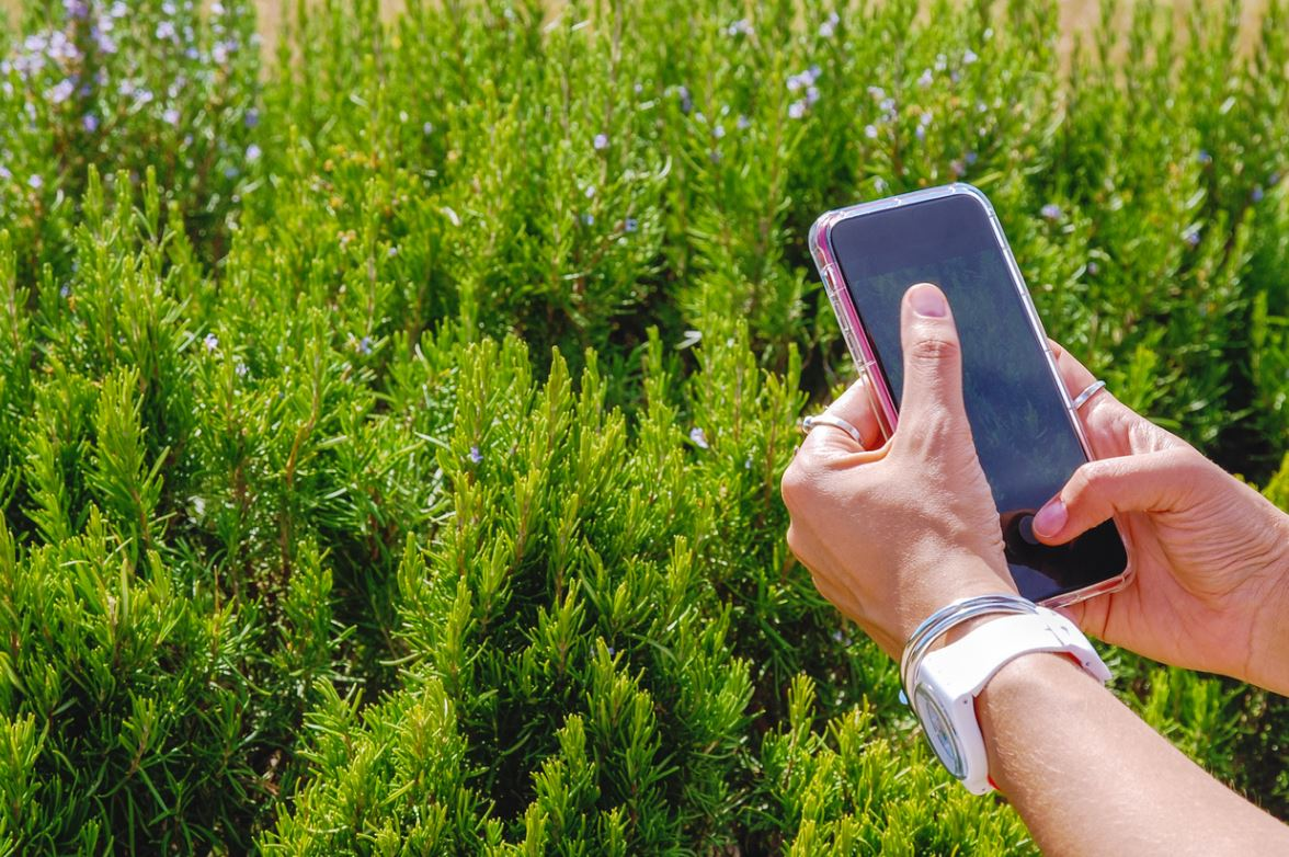 Application Mobile Plantes