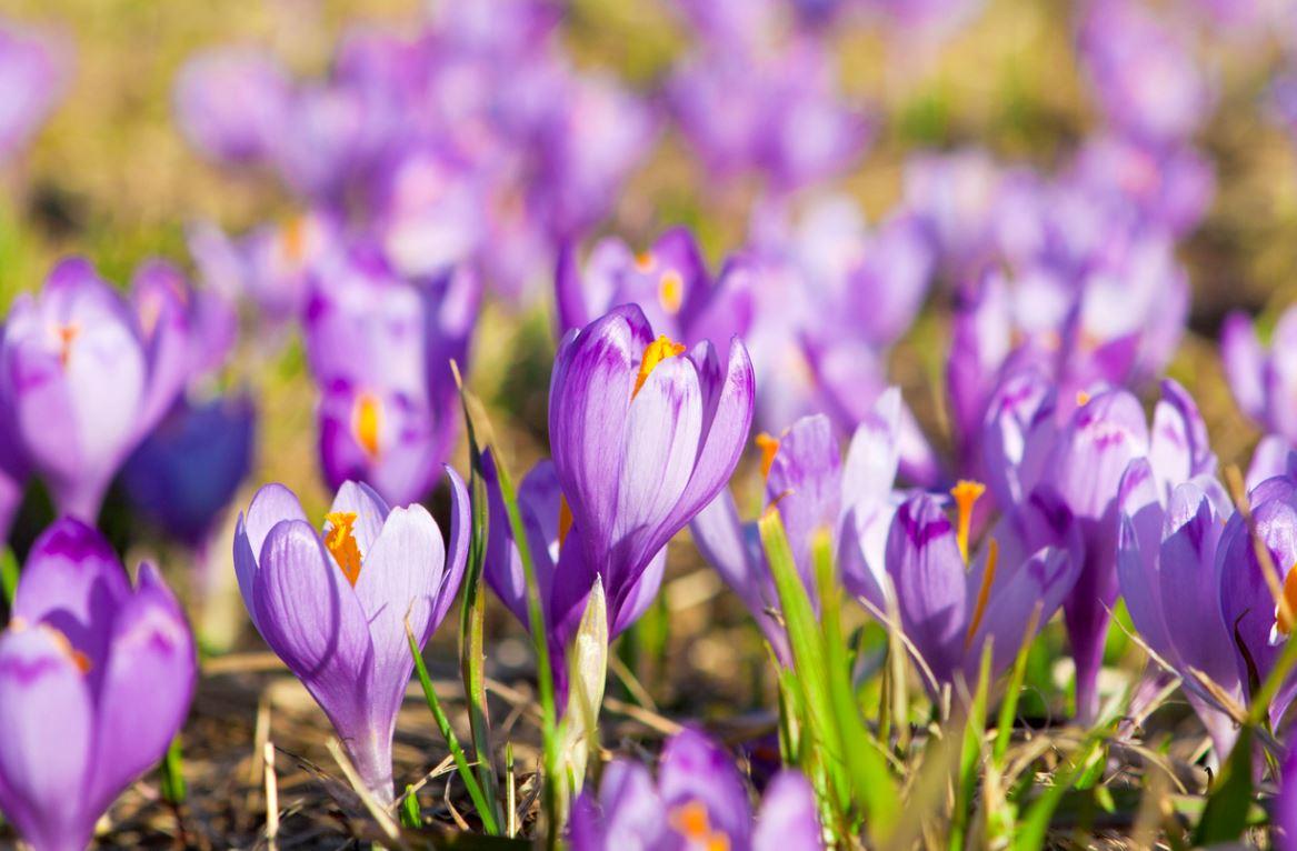 Jardin Aout Fleur Colchiques