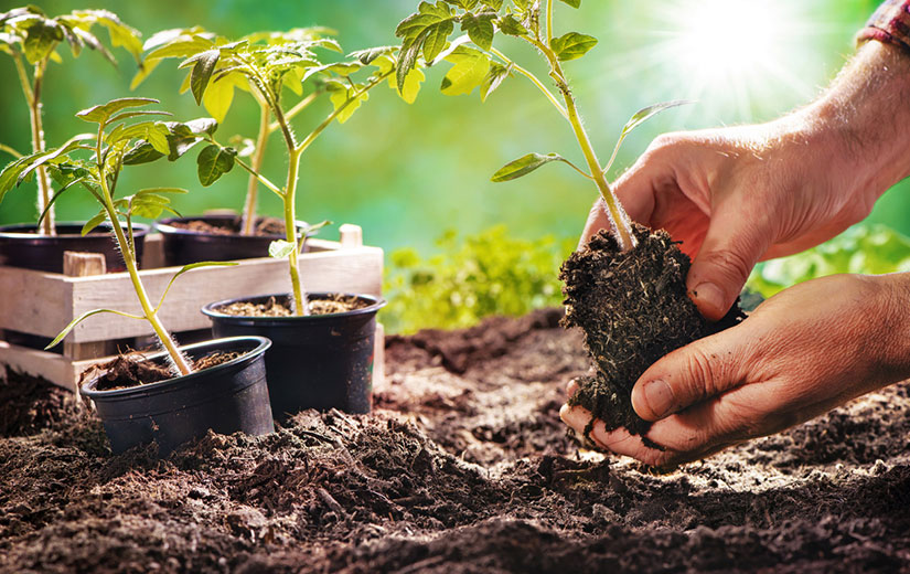 Que Planter En Juillet