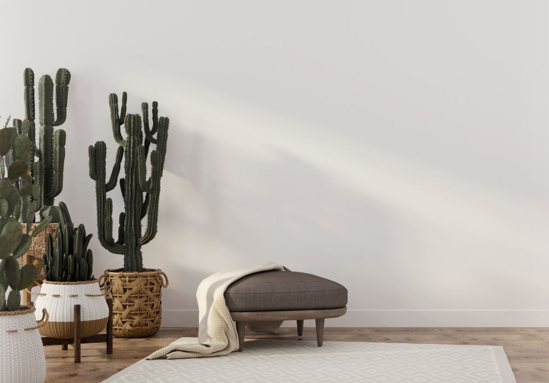 Salon Avec Cactus Et Plantes Vertes