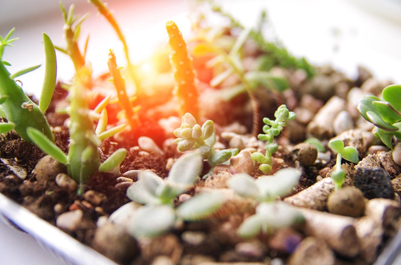 Bouturer Des Plantes Grasses