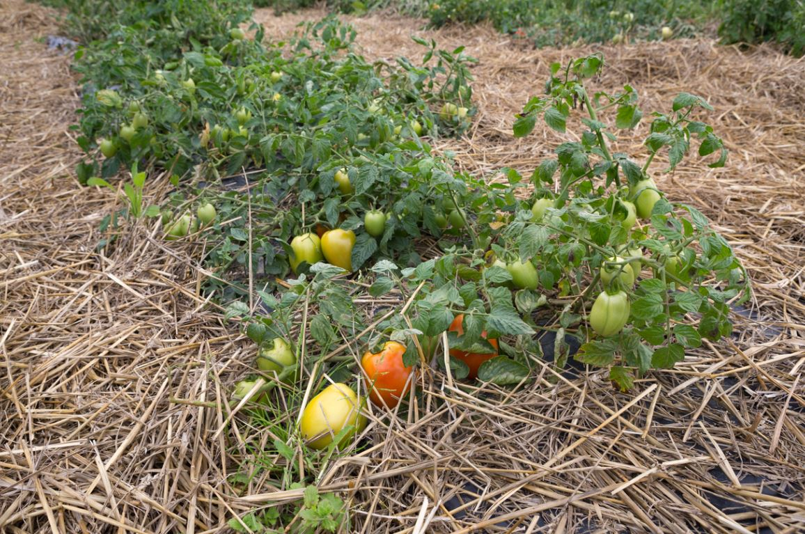 Butte Permaculture Potager Bio
