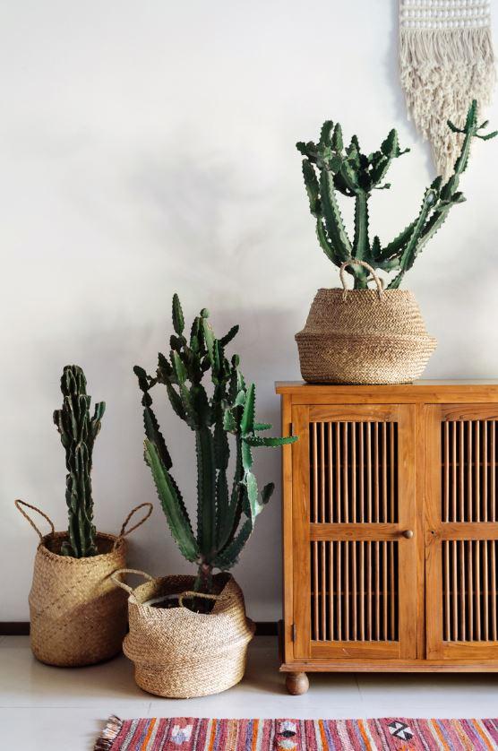 Les Plantes Sont Des Ornements Parfaits Pour Une Ambiance Bohème Dans Votre Intérieur