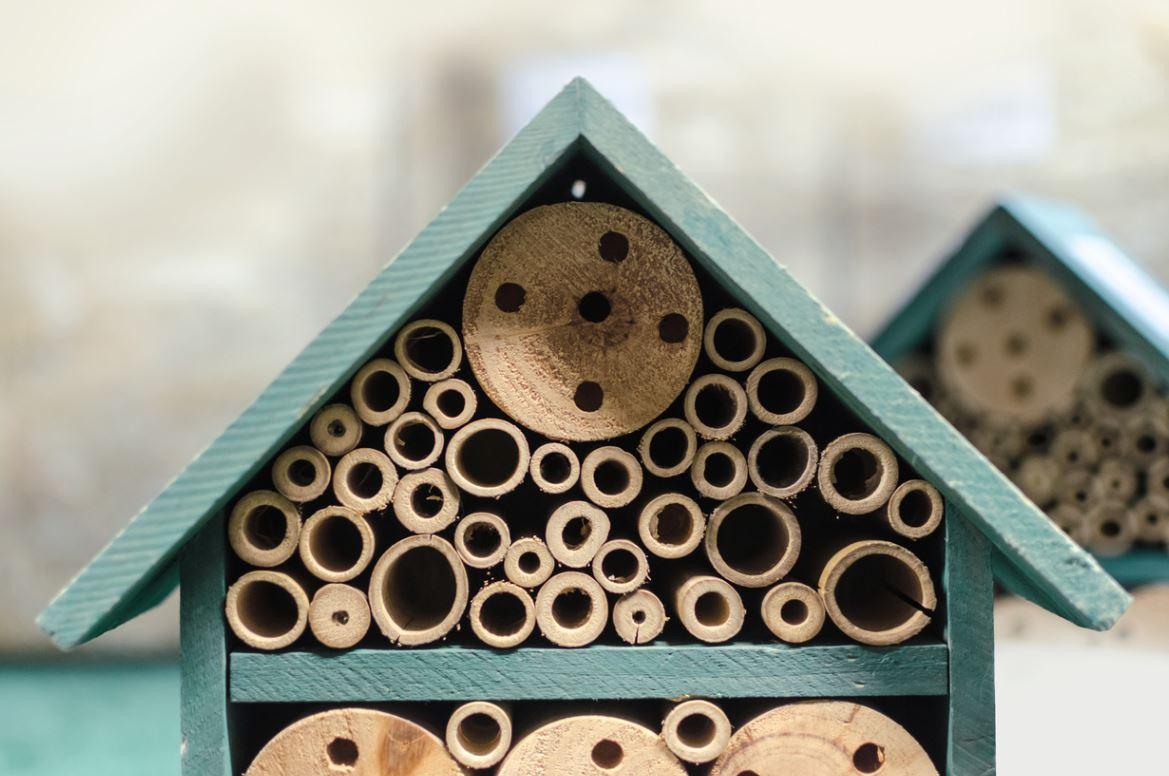 Maison A Insectes Abri