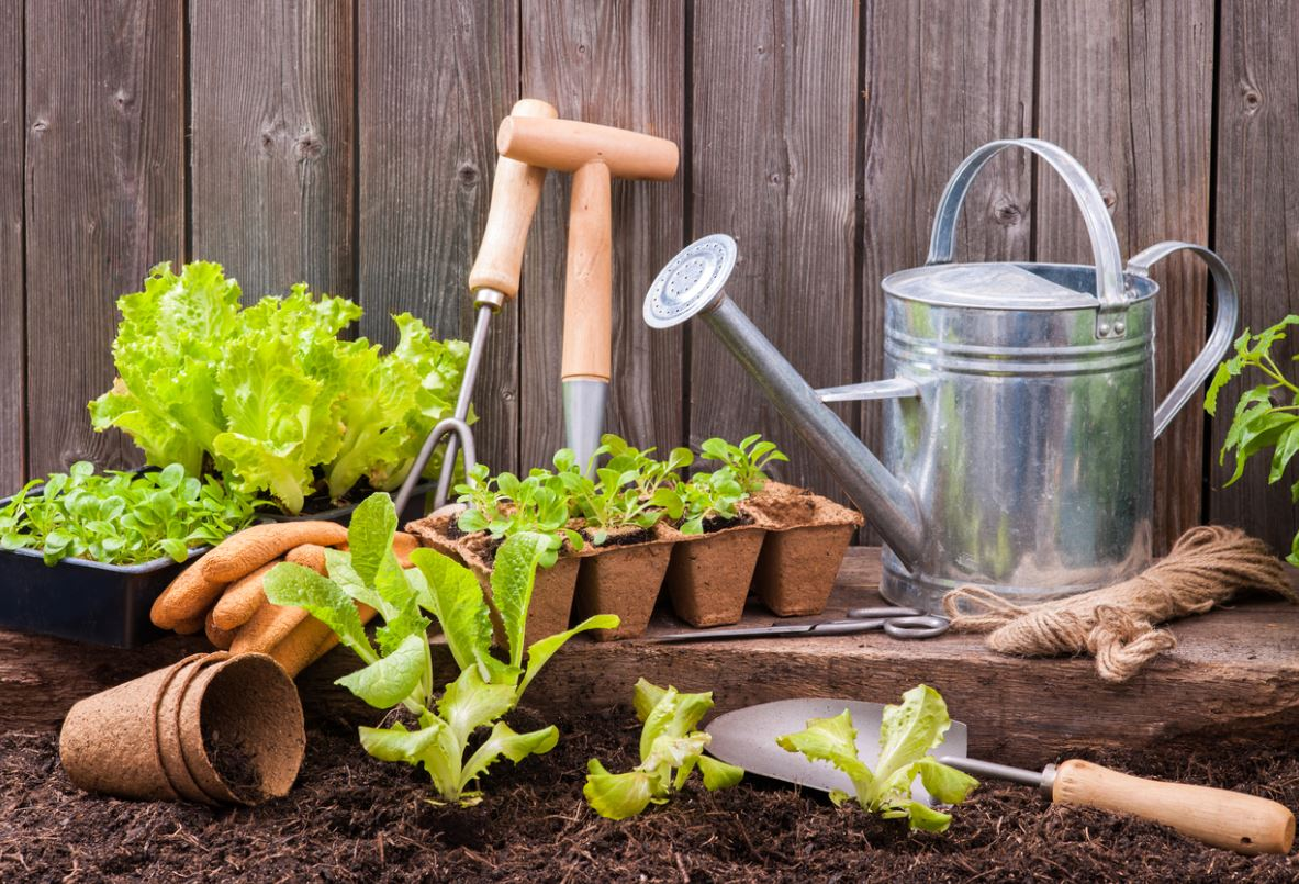 Outils Indispensables Potager Jardin
