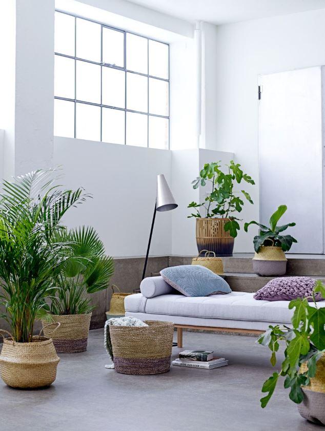 Deco Jungle Osier Et Plantes Vertes