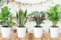 4 Plantes Interieur