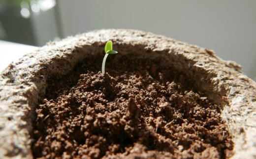 bouture semi d'une plante