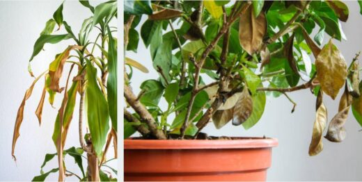 Maladie Plante Interieur