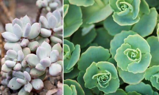 Plantes Grasses Extérieures