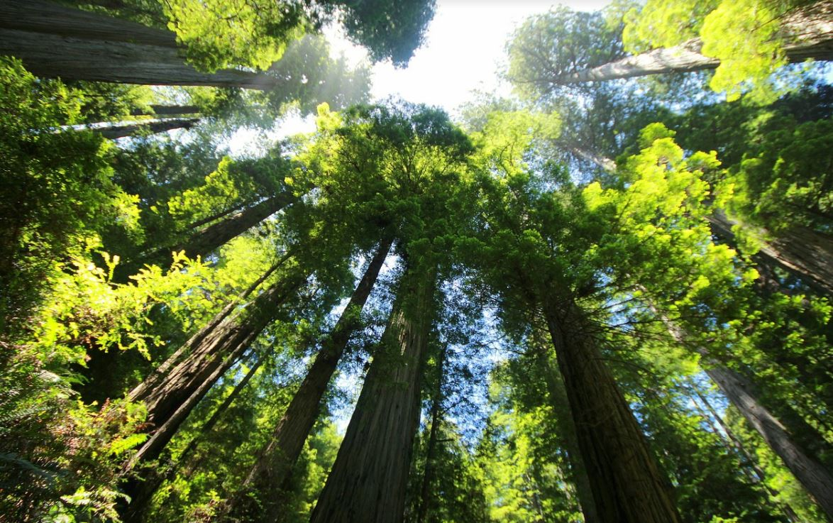 Séquoia