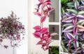3 Types De Plantes Misères