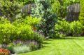 arbustes ornementaux