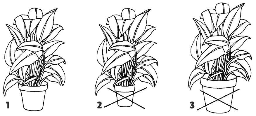 Le Choix Du Pot Plante Verte