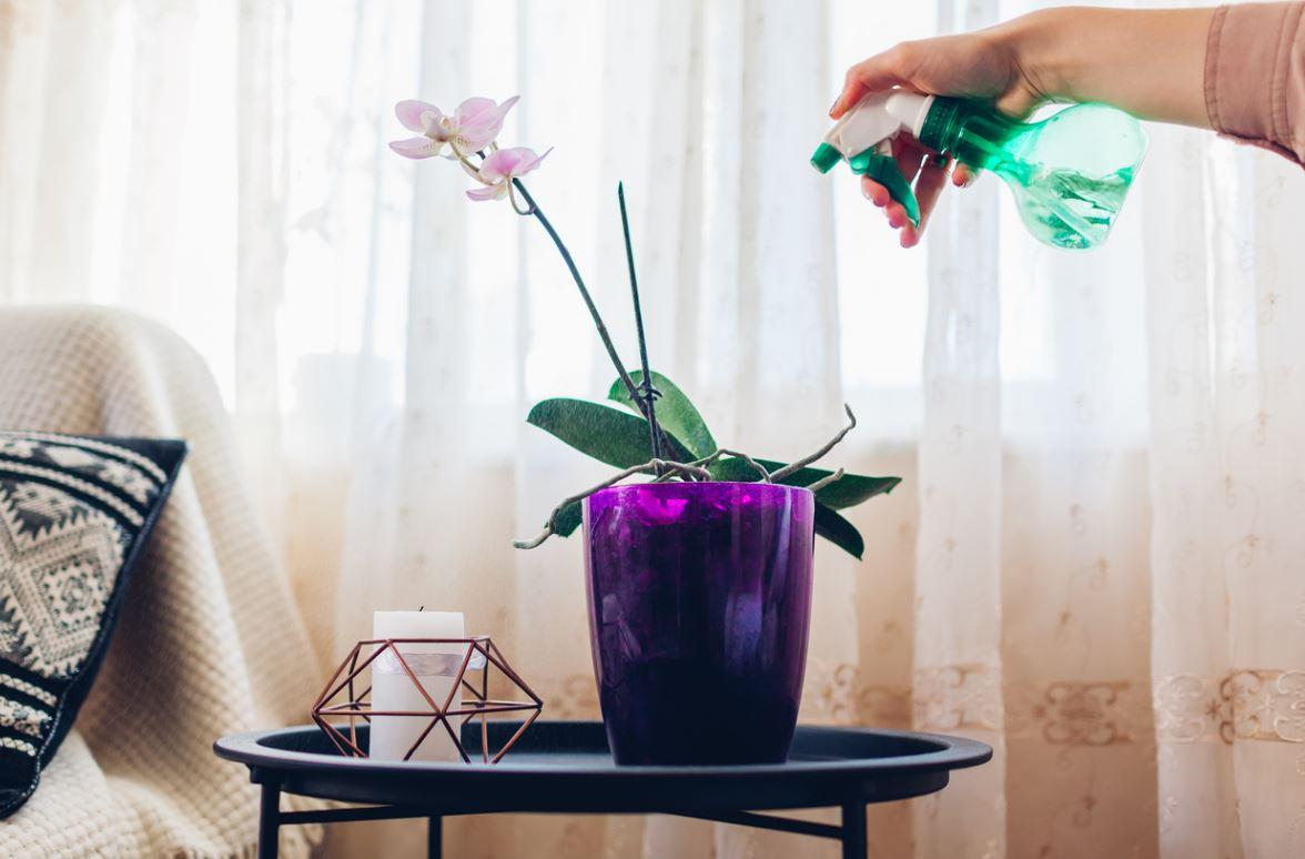 Arrosage Orchidée Vaporiser