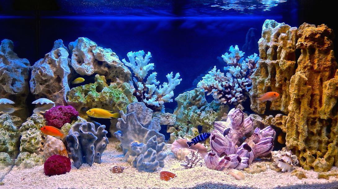 Eau Aquarium Engrais
