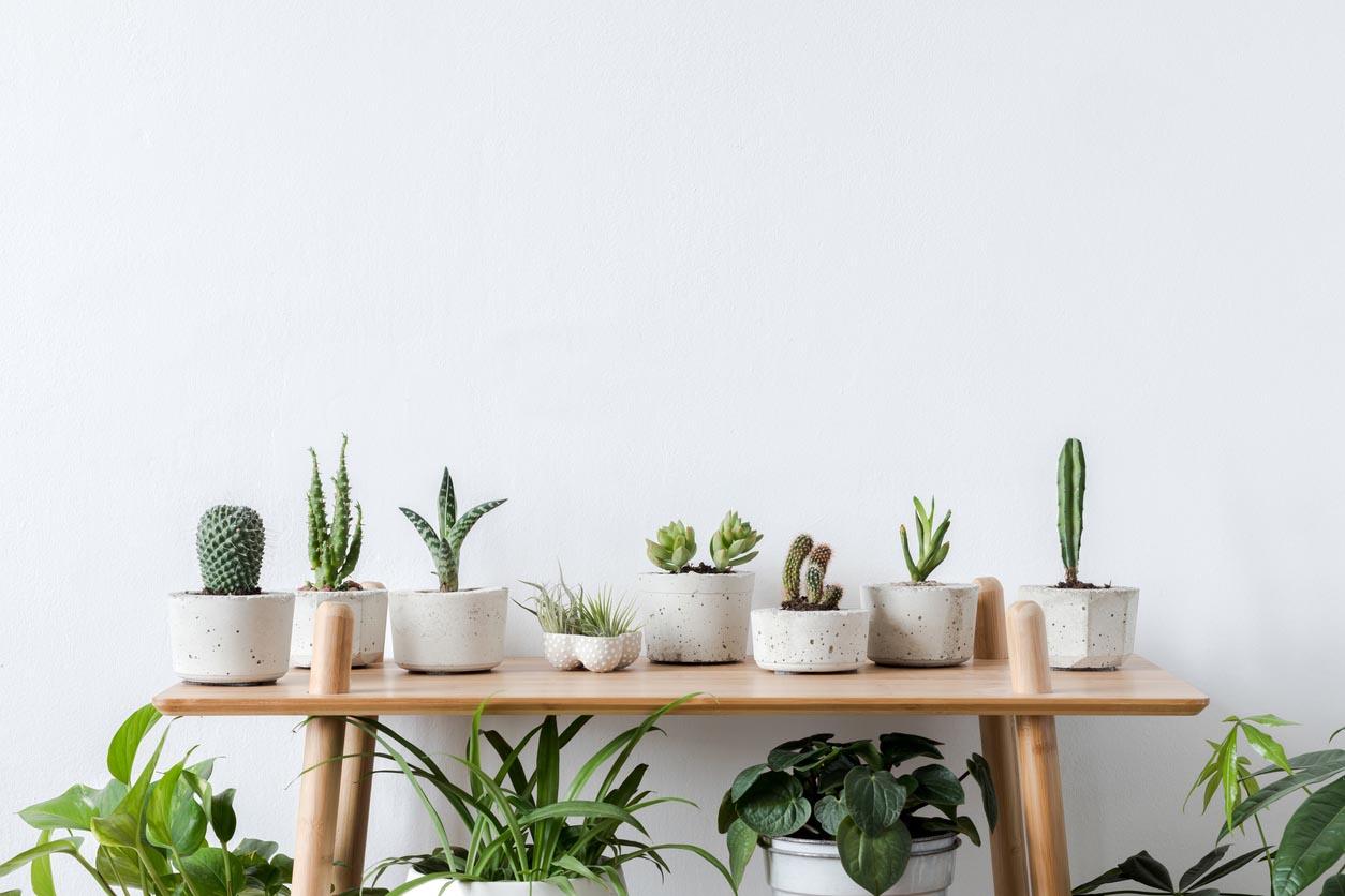 composition de succulentes et de cactus