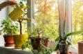 arrosage de plantes verte