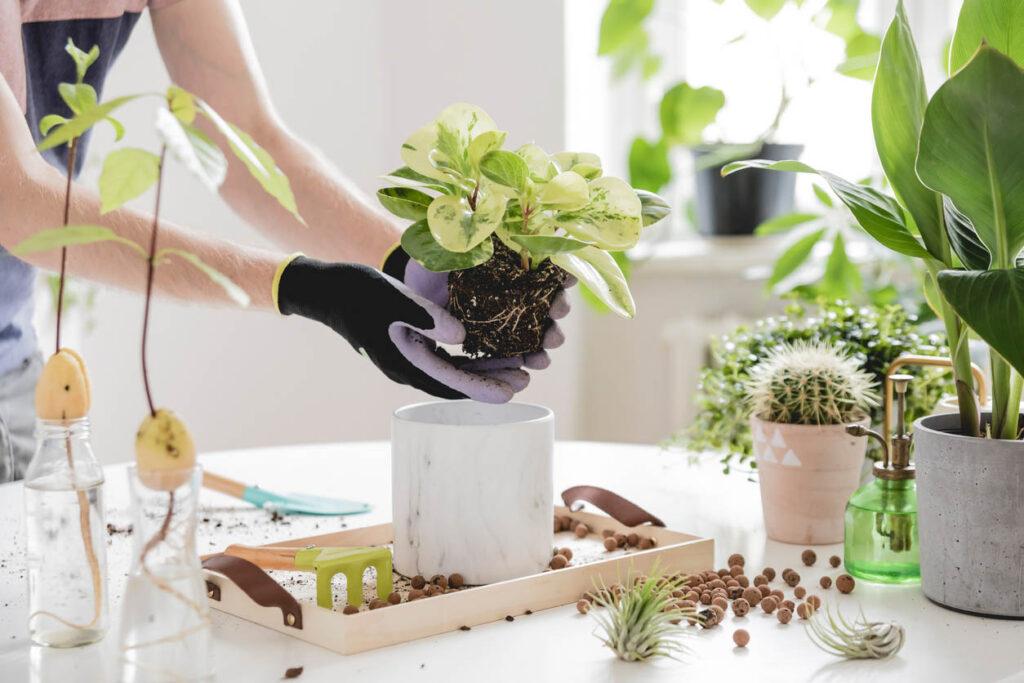 femme qui rempote sa plante verte