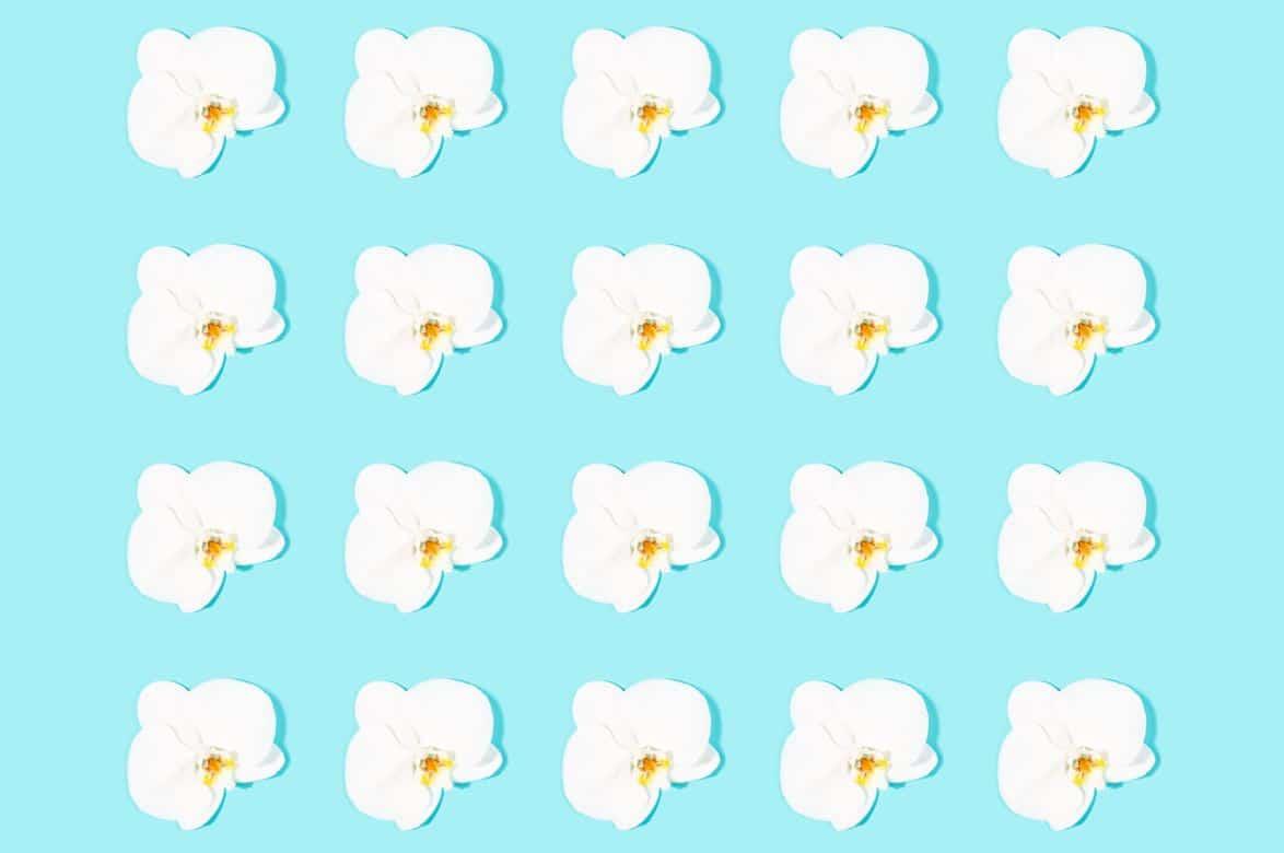 Multiplier Une Orchidée
