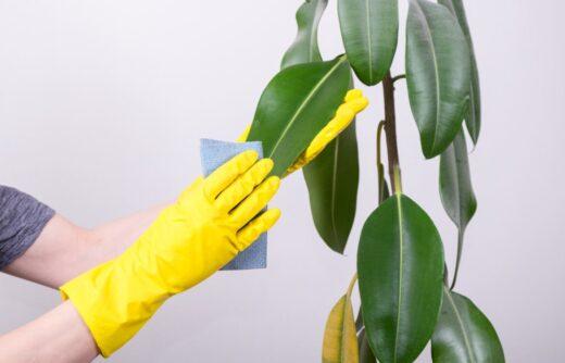 Nettoyer Plantes