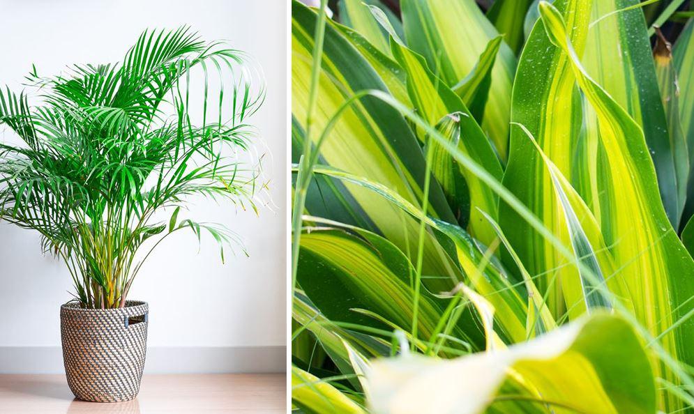 plantes dépolluantes eau)