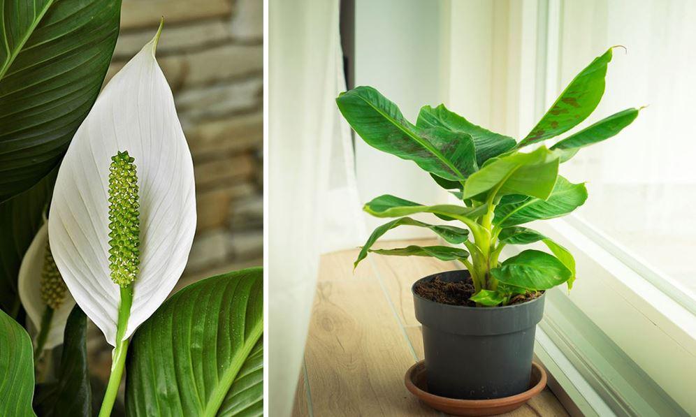 Plantes Intérieures Salle De Bain