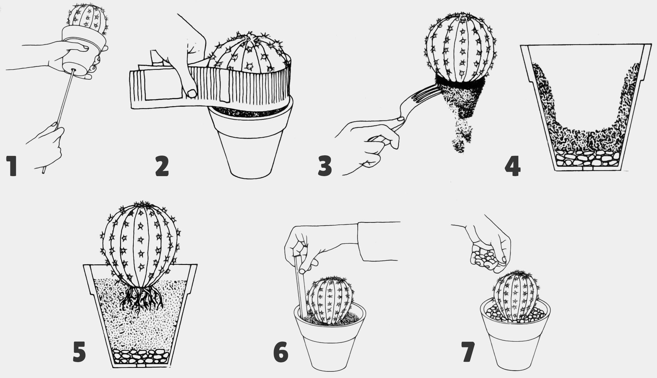 illustration des étapes pour Rempotage Cactus