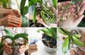 Sois Orchidée En Pot