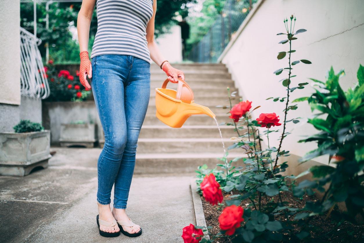 femme qui arrose ses rosiers