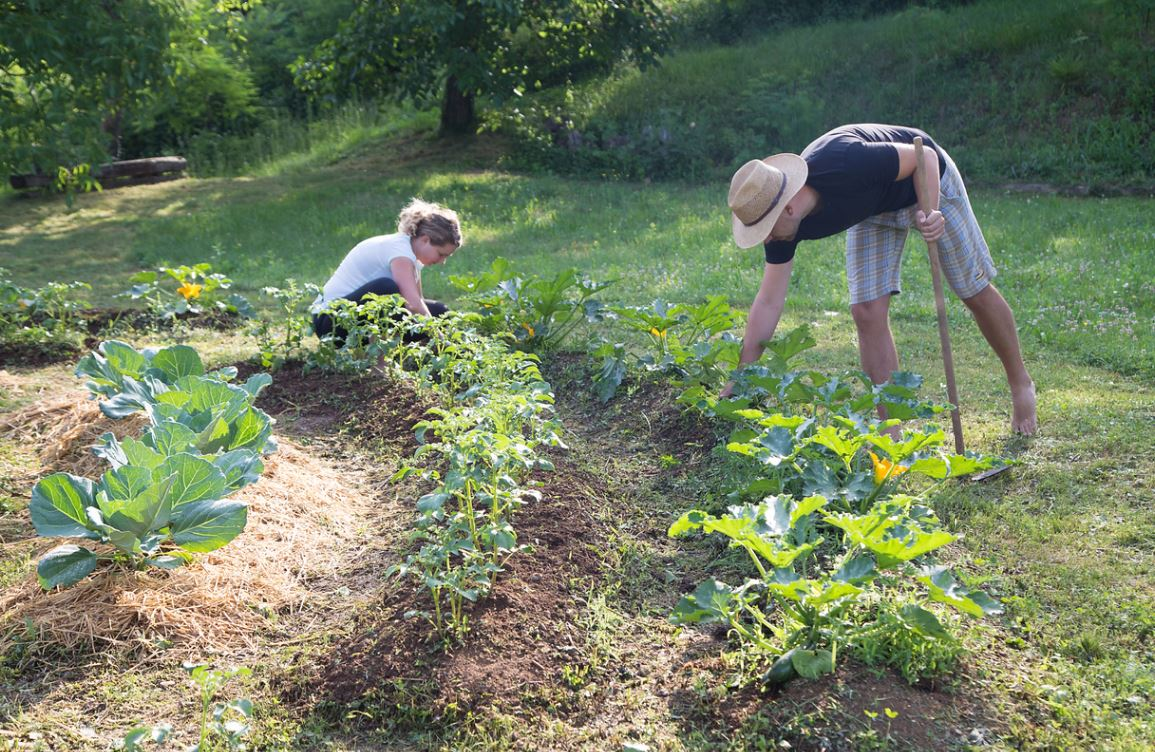 Jardin Potager Permaculture