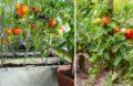 Tuteurs A Tomates