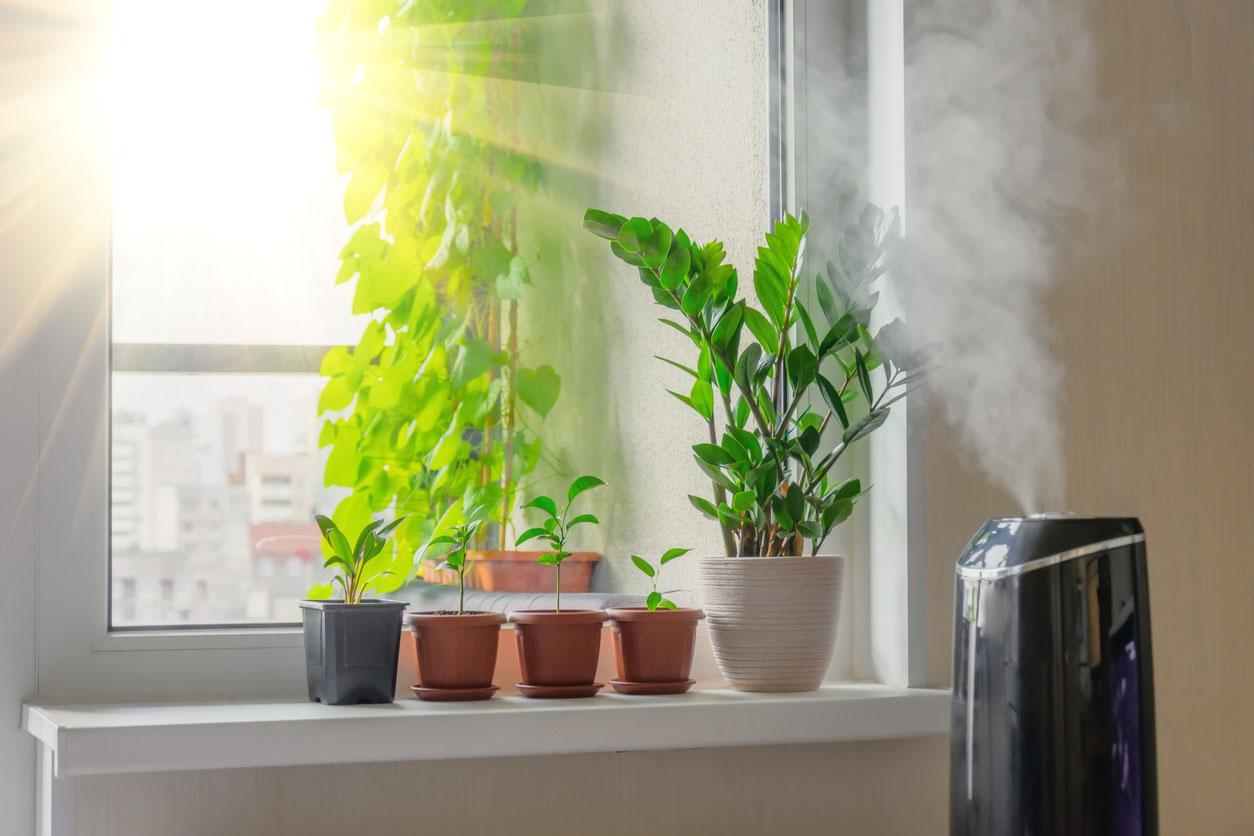 Plantes décoratives zamioculcas et à feuilles caduques intérieures sur le rebord de la fenêtre dans un appartement avec un humidificateur à vapeur