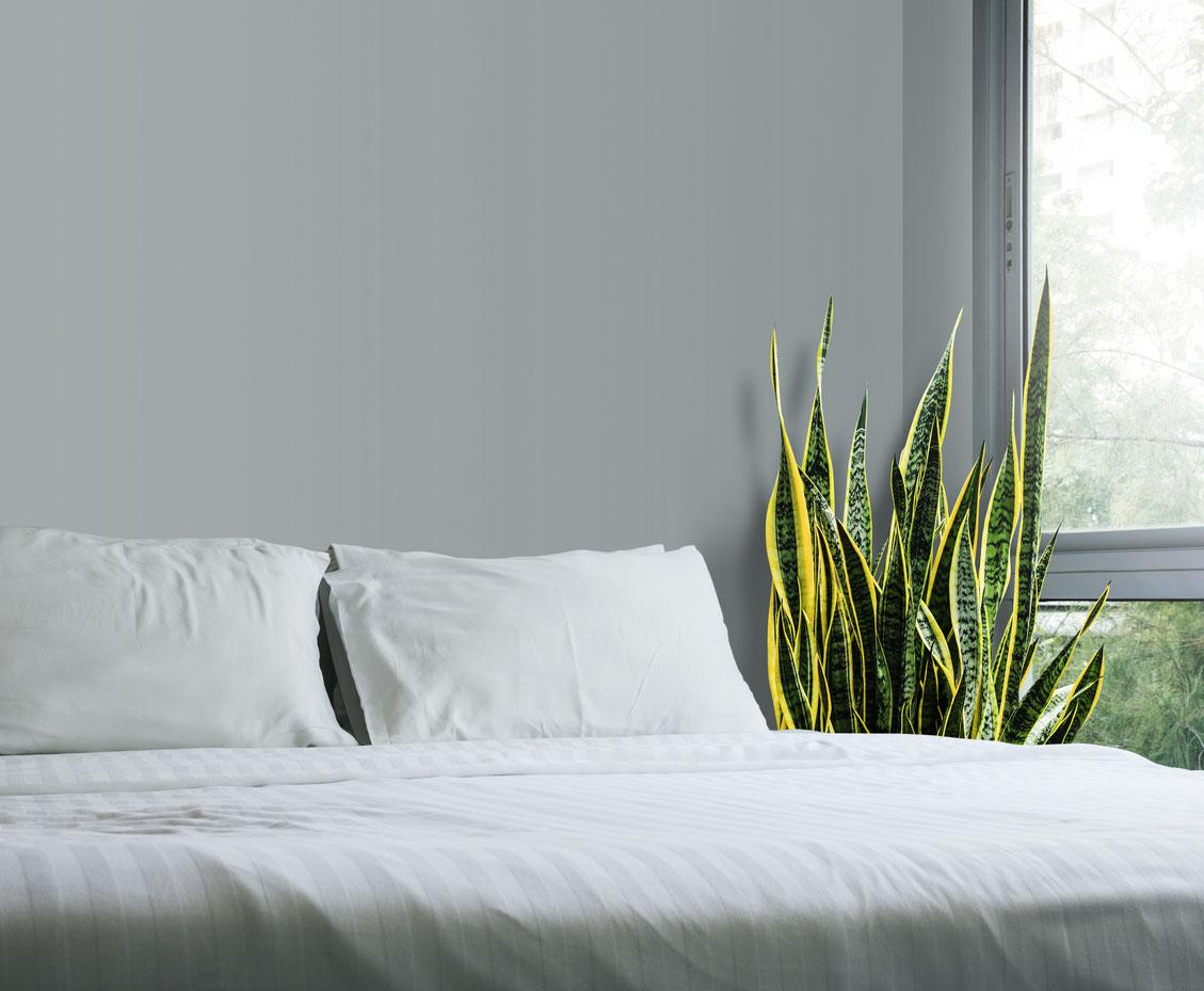 sansevieria trifasciata dans la chambre à coucher