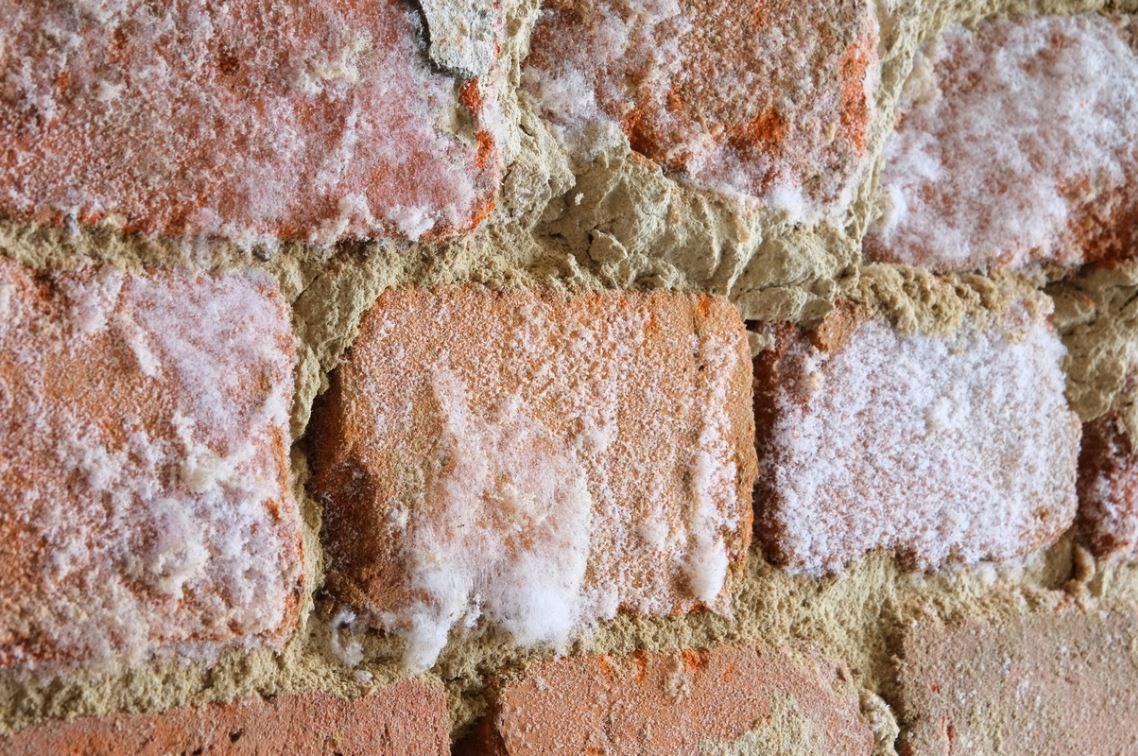 Mur Humide Avec Salpetre