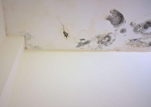 Moisissure Plafond
