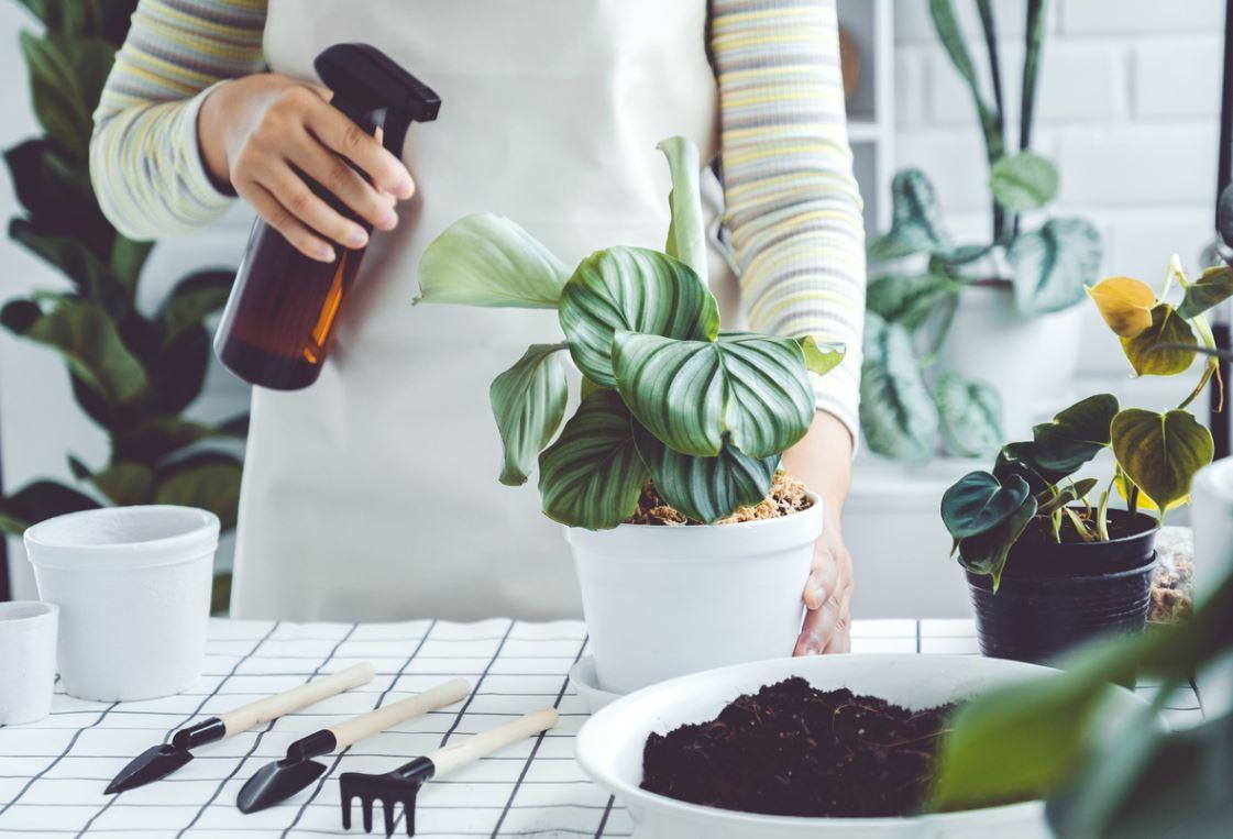Nettoyage Feuilles Plantes