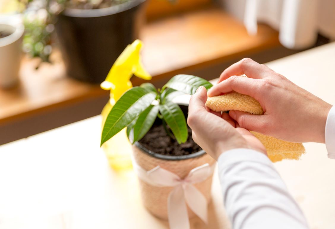 Nettoyer Feuilles Plantes