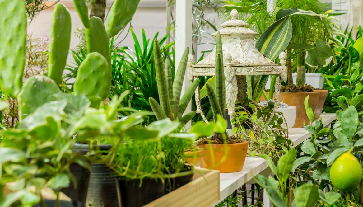 Plantes Balcon Plein Sud