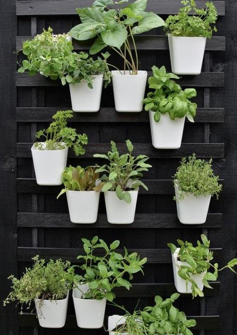 Un Jardin D'aromatiques Dans Des Pots à Suspendre